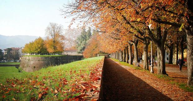 Lucca - mura